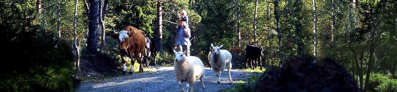 Ingebjørg og på tur med alle dyrene